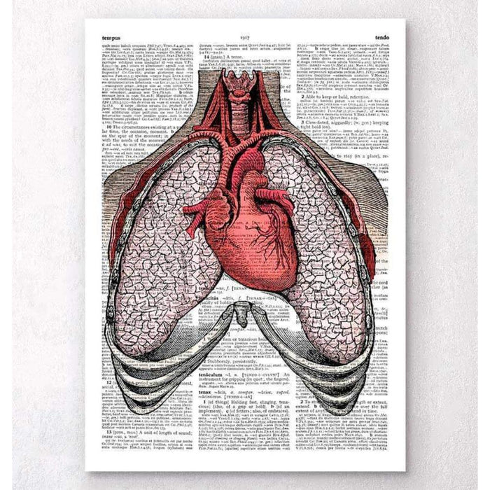 Heart And Lungs Dictionary Page