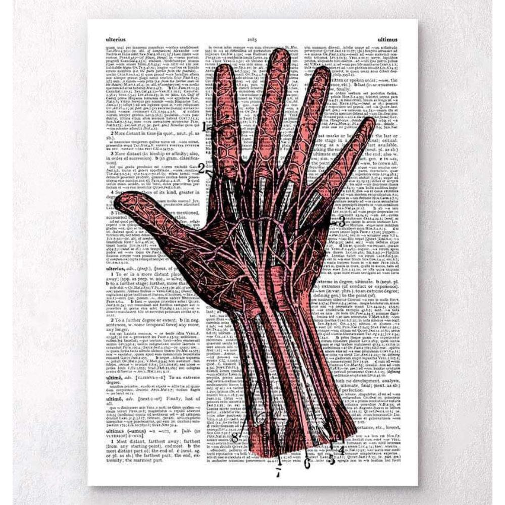 Hand Anatomy Dictionary Page