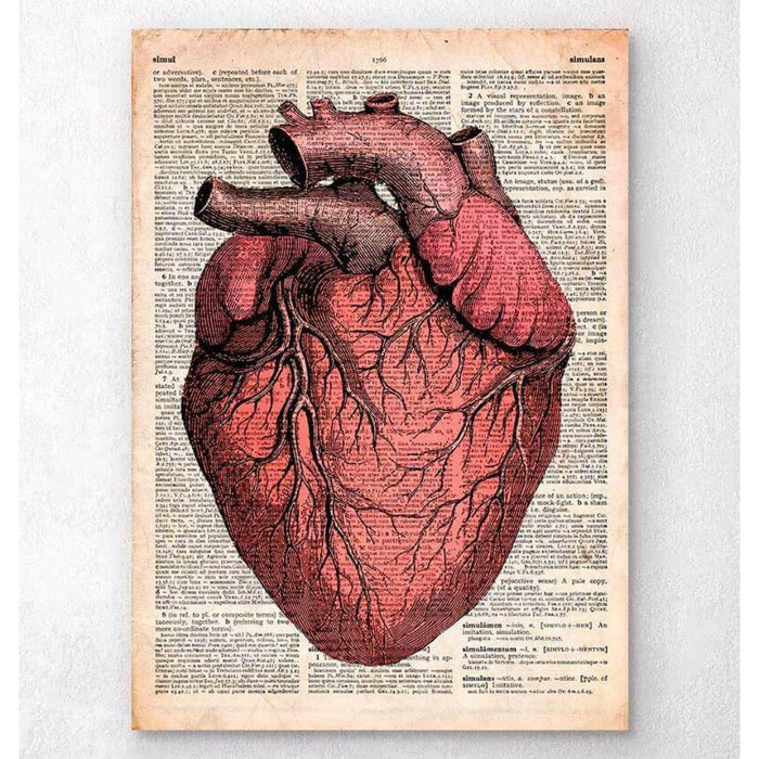 Heart Anatomy Old Dictionary Page