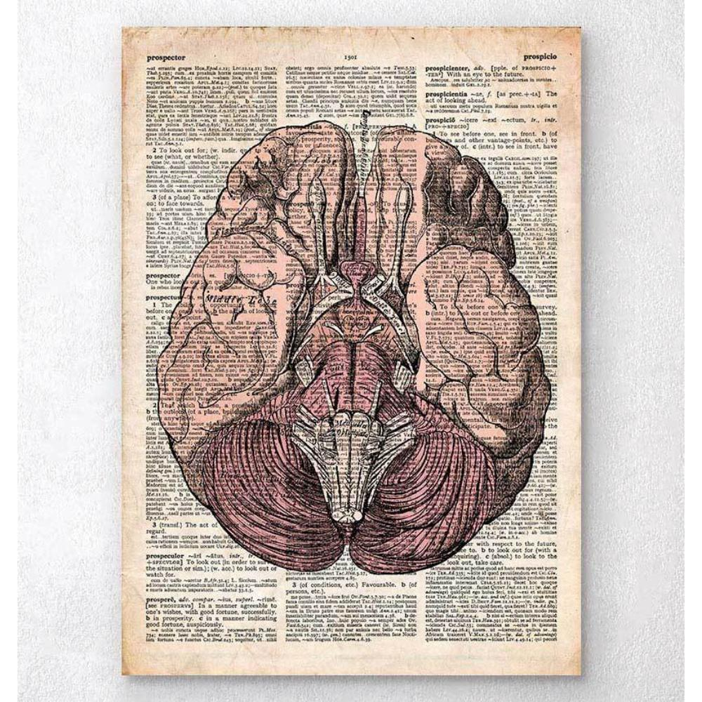 Brain Anatomy Print Old Dictionary Page