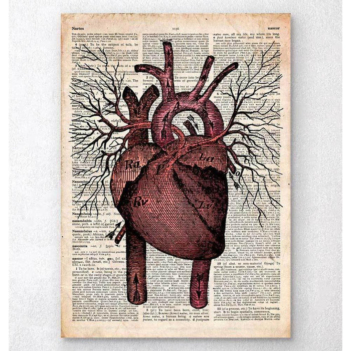 Heart Anatomy II Old Dictionary Page