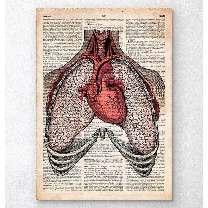 Heart And Lungs Old Dictionary Page