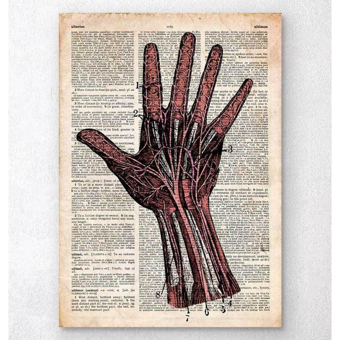 Hand Anatomy Old Dictionary Page