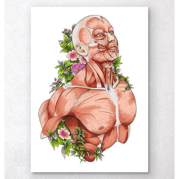 Male Body Anatomy Art White