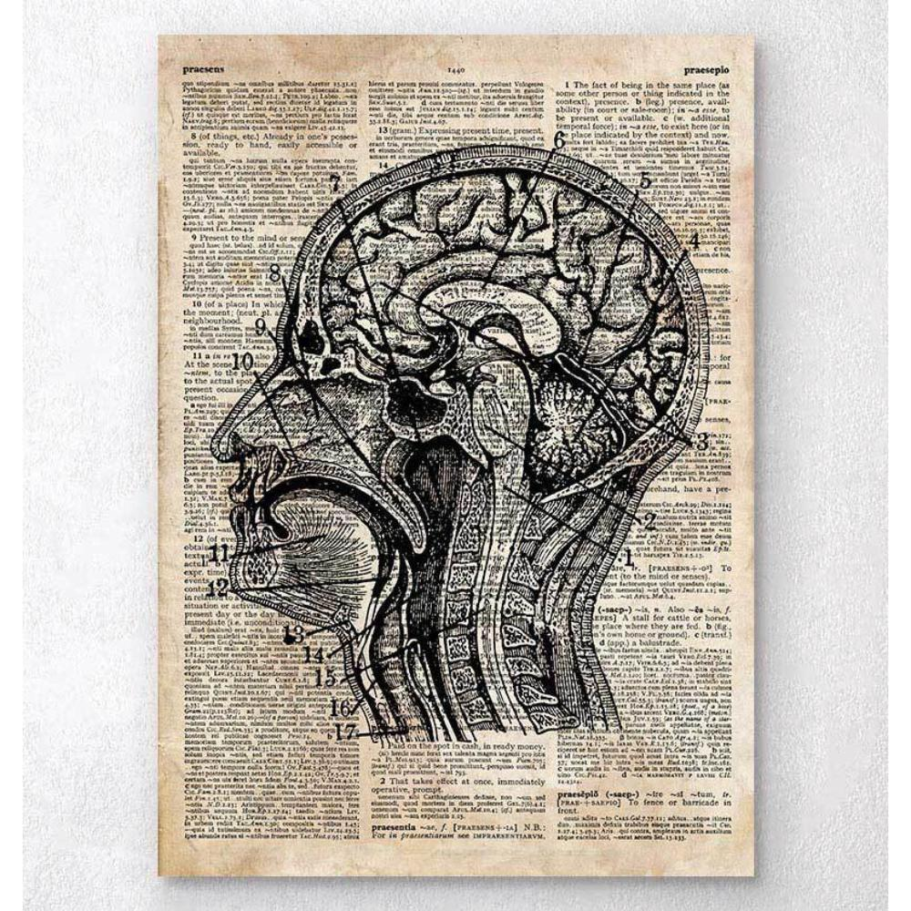 Brain Anatomy Art I Old Dictionary Page