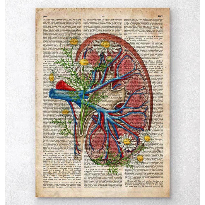 Kidney With Flowers Old Dictionary Page