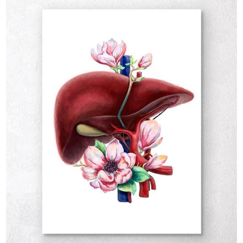 Liver Anatomy Floral White