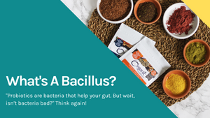 What's a Bacillus?