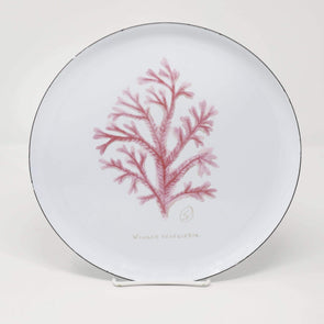 Kitchen Coral Plate - Enamel