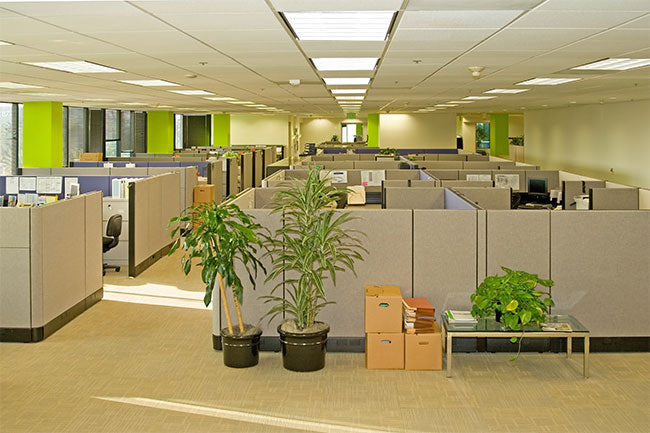 Complementing Your Office Furniture With Plants