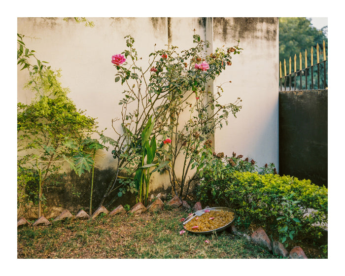 """Amla"" by Saleem Ahmed. An inkjet print depicting a rose bush within an enclosed garden. Photography, Color, Plants, Nature, Cityscape. The Print Center"