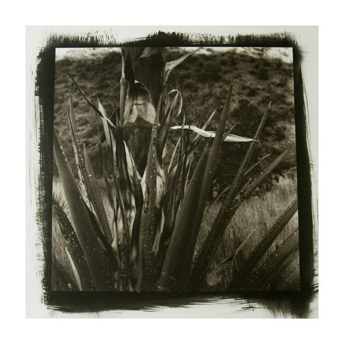 Desert Agave #2 Platinum/Palladium Print James Syme the print center Photography desserts nature plants healing black and white abstraction