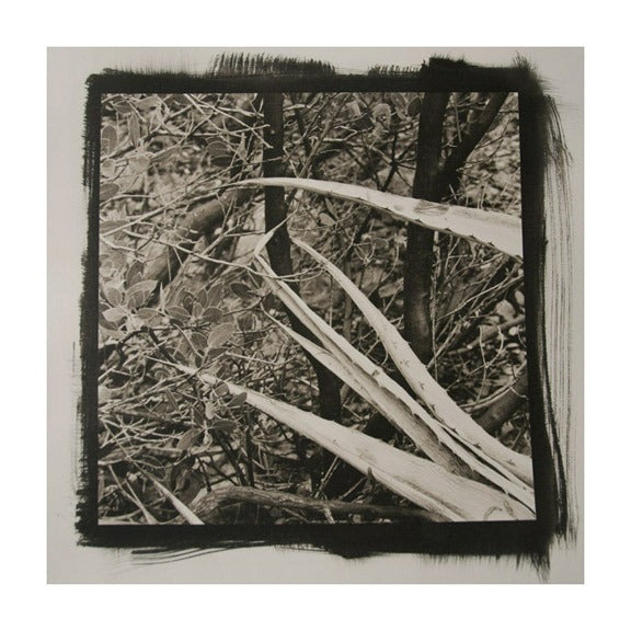 Desert Agave #3 the print center James Syme Platinum Palladium Print Photograph black and white abstraction plants