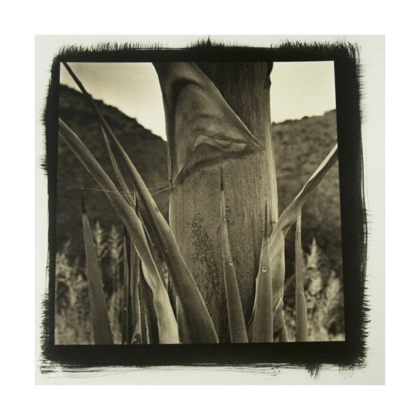 Desert Agave #9 Platinum Palladium Print The Print Center James Syme black and white abstraction photography nature landscapes plants cactus succulent