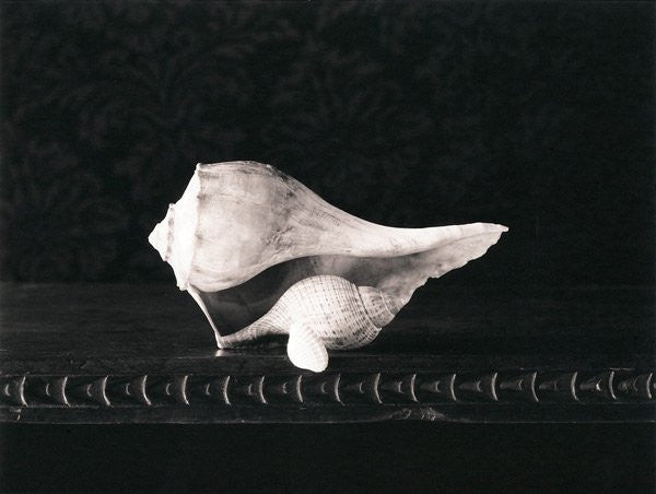 Gift of shells Inkjet Print D.W. Mellor the print center still life contrast photography