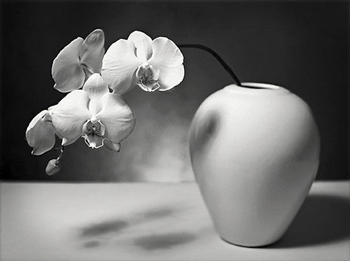 Moth Orchid II John Benigno photographs the print center flowers in a vase contrast Philadelphia