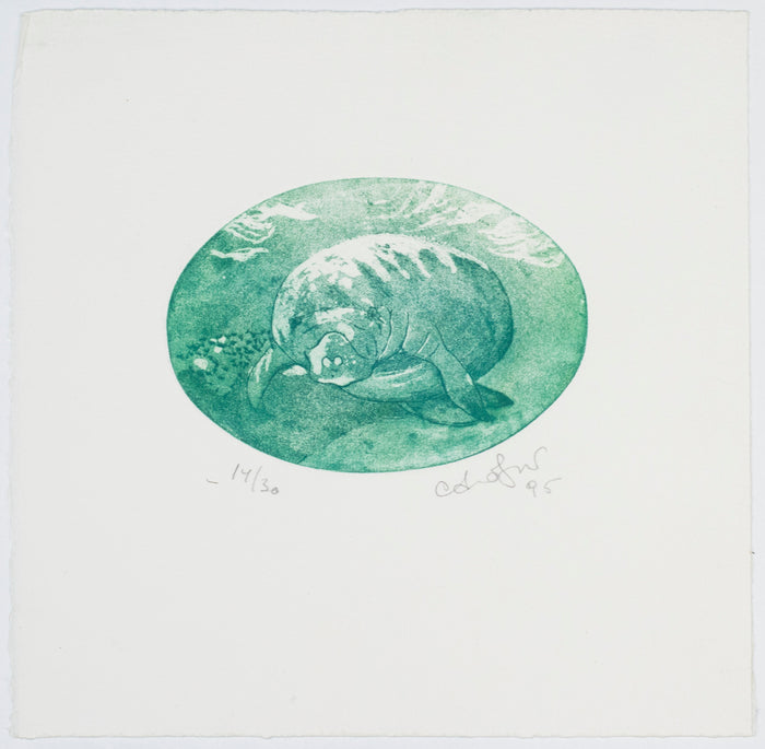 Manatee Anna Jeretic Etching animal in a blue circle of the ocean the print center gallery store