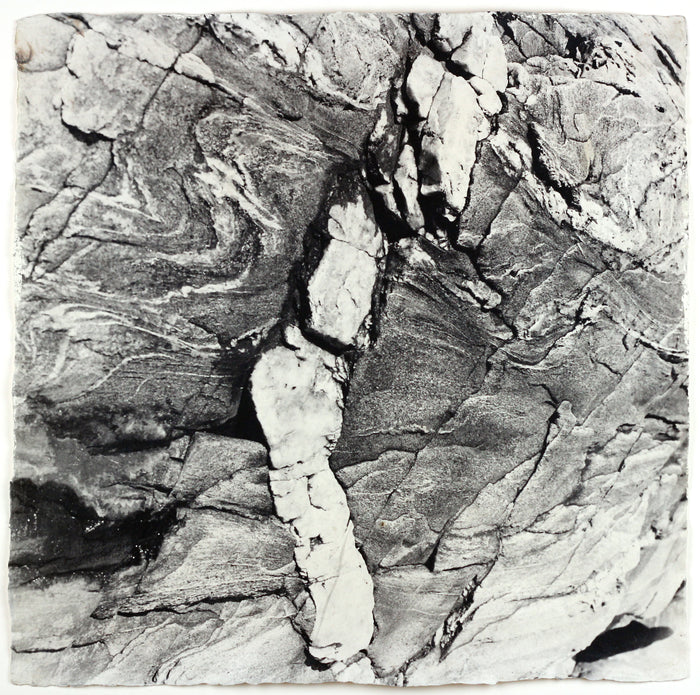 """White Vein"" By Susan Abrams. A Selenium toned silver print on artist made paper. Black and White, Photograph, Nature, Close-up, Wood Grain. The Print Center"
