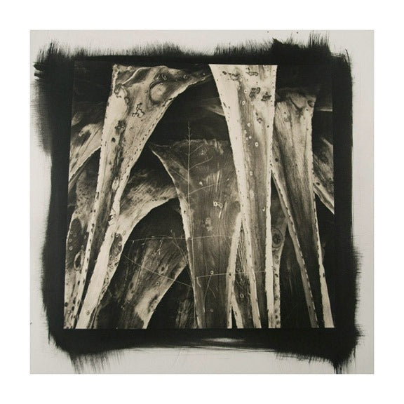 Desert Agave #7 James Syme Platinum Palladium Print Black and White Abstraction photography the print center plants triangles contrast