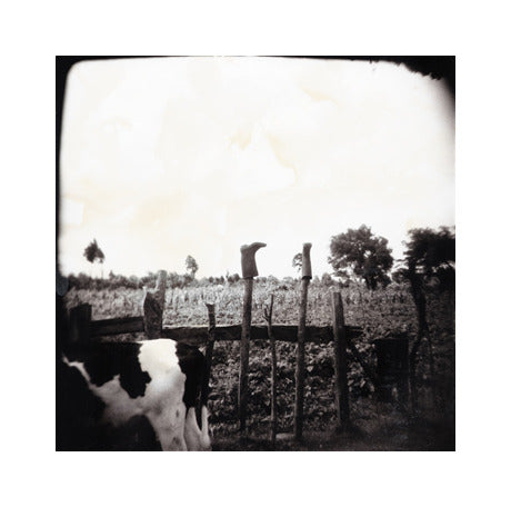 Boots Julia Blaukopf Gelatin Silver Print Cow Landscapes Made in Philadelphia Photography