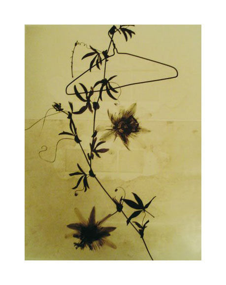 Blooming vine Susan Dunkerley Gelatin Silver Print Vine flowers Clothes-hanger The Print Center Photographs