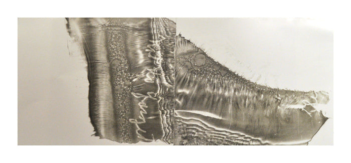 """Sets"" a lithograph by Hester Stinnett. Depcits an abstract image with wave motions, water bubbles and writing, in a shape reminiscent of a foot. Printmaking, black and white, memory, Fragments, Nature, shoreline, landscapes, water. The Print Center"