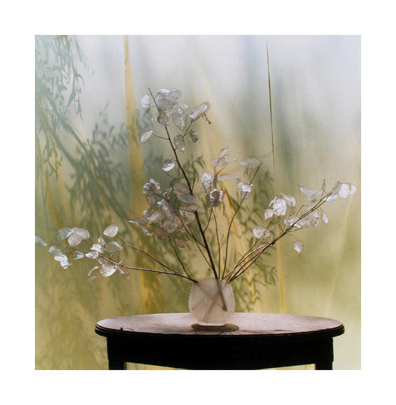 Inside/Outside #7 Carla Shapiro Inkjet Print landscapes photographs table flowers shadows fabric still life