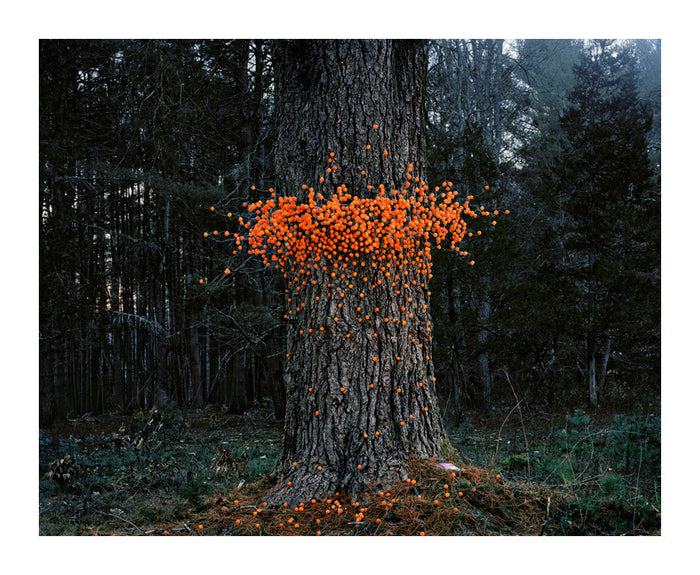 Cheese Balls Inkjet Print Thomas Jackson The Print Center Photographs nature tree