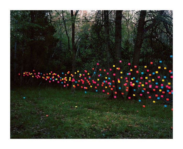 Post-its #1 photography floating objects forest thomas Jackson inkjet print