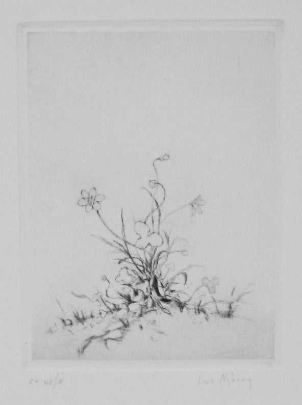 Hepatica Noblis, small Lars Nyberg Intaglio flower simple linework nature grass delicate outlines tracing gesture