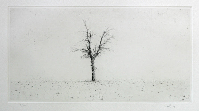 Olive Lars Nyberg Intaglio tree black and white photography and contrast