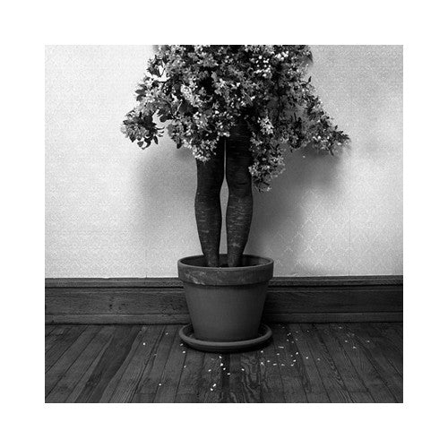 Potted Gelatin Silver Print Keith Sharp the print center black and white photography figurative plant