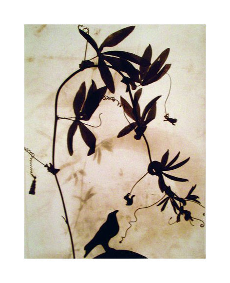 Raven susan dunkerly the print center gelatin silver print branch and bird silhouette