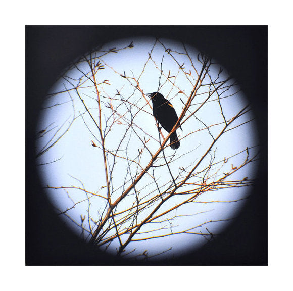 Redwinged Blackbird Tree Jeannie Pearce Inkjet Print made in Philadelphia vignette bird branches