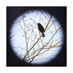 Redwinged Blackbird Tree