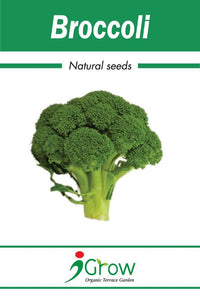 Naturally-Treated Organic Broccoli Seeds- 50 Seeds per Pack (Pack of 2)