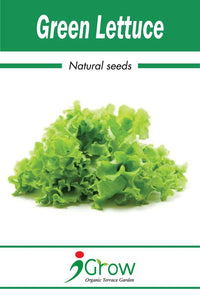 Naturally-Treated Organic Green Lettuce Seeds - 50 Seeds Per Pack (Pack of 2)