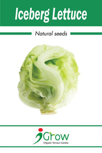 Naturally-Treated Organic Iceberg Lettuce Seeds - 50 Seeds Per Pack (Pack of 2)