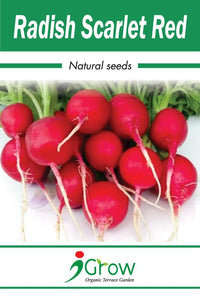 Naturally-Treated Organic Red Radish Seeds - 50 Seeds Per Pack (Pack of 2)