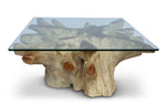 Root Coffee Table W/ Glass
