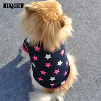 Best Dog Jackets for Winter - Dog clothes