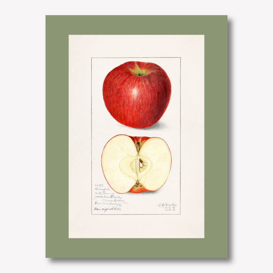 Vintage Watercolor Apple Art | FREE USA SHIPPING | www.WallArt.Biz