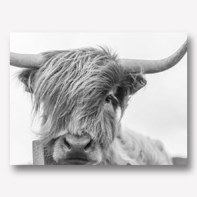 BLACK & WHITE HIGHLAND COW WALL ART | FREE USA SHIPPING | WWW.WALLART.BIZ