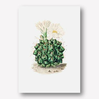 Cacti - Set of 6 | Free USA Shipping | Wallart.biz