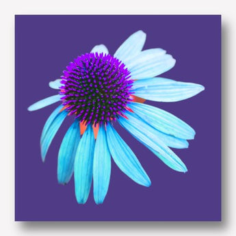 FLOWER POWER | FREE USA SHIPPING | WWW.WALLART.BIZ
