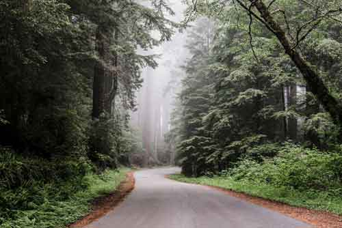 Forest Road Gallery Wall | Free USA Shipping | Wallart.biz