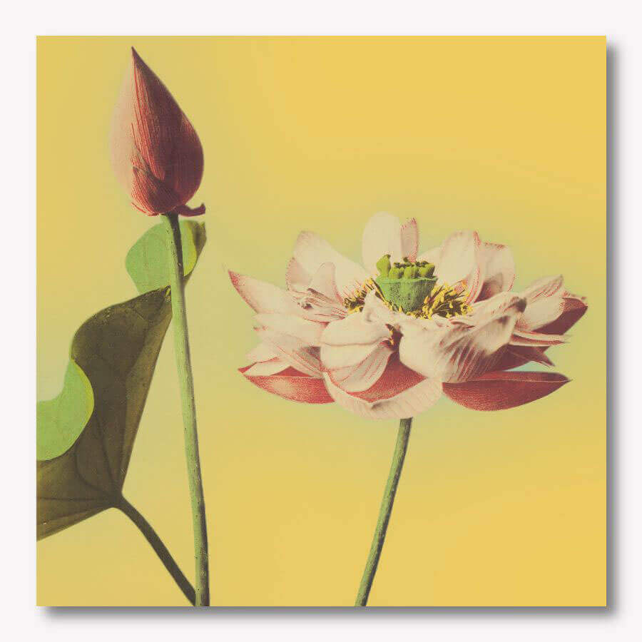 Ogawa Kazumasa - Lotus flower yellow | Free USA SHIPPING | WallArt.Biz