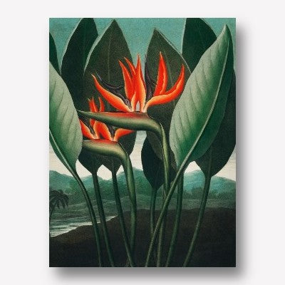 The Queen Plant | Free USA Shipping| www.wallart.biz