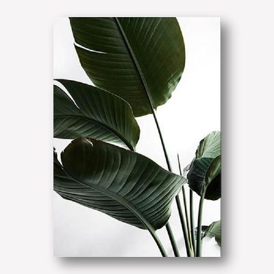 Nature Gallery Wall Ideas | FREE USA Shipping | WALLART.BIZ