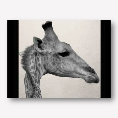 Giraffe Botswana Wall Art | FREE USA SHIPPING | WallArt.Biz